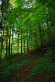 skogbana Arkivbild