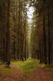 skogbana arkivbilder