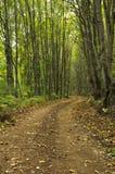 skogbana Royaltyfri Bild