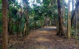 skogbana i Florida Arkivfoto