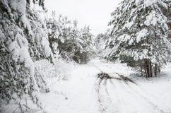 Skogbana i vintern Fotografering för Bildbyråer