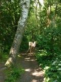 Skogbana med det cuted trädet Arkivfoto