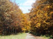 Skogbana med färgrika träd Arkivbilder