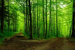 Skogbana med två vägar Arkivbild