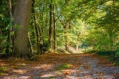Skogbana på en oktober eftermiddag Tankenberg, Oldenzaal, Nederländerna fotografering för bildbyråer