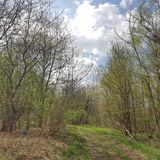 Skogbana på foten av den Arkenberge kullen i Berlin i spri royaltyfri fotografi