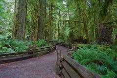 skogbanaspolning Arkivfoto