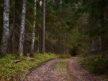 Skogbanor till nya ställen royaltyfri foto