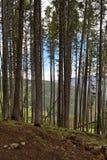 Skogberget förbiser till och med filtrerade träd Royaltyfri Foto
