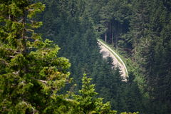 skogbergväg Arkivfoto