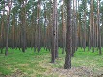 Skogblåbär Arkivbilder