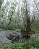 Skogbusksnår Ett elakt troll besöker Relictskog, röd al Arkivbilder