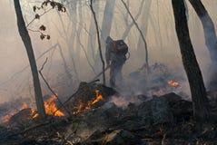 skogdämpning för 18 brand Arkivbild