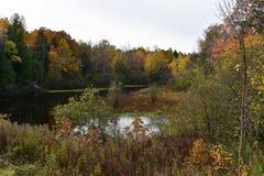 Skogdamm med färgrika nedgångträd Fotografering för Bildbyråer