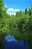 skogdammreflexion Arkivbilder