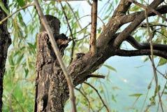 Skogdjurlivorm royaltyfri foto