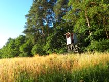 Skogeith som jagar område Royaltyfri Bild