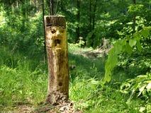 skogelakt troll Royaltyfri Bild