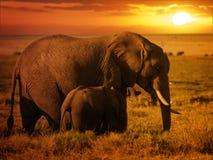 Skogelefant med hennes kalv på solnedgången Royaltyfri Bild