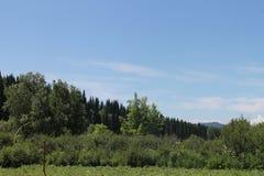 Skogen är min - min vän fotografering för bildbyråer