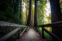 Skogen överbryggar Royaltyfria Foton