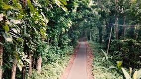 Skogen stock video