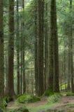 Skogen Arkivbild