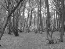 Skogen Arkivfoto