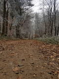 Skogen Royaltyfria Foton