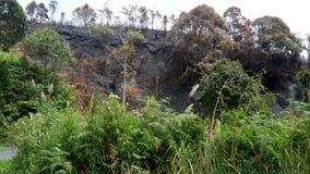 Skogen Arkivbilder