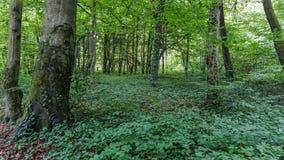 Skogen arkivfoton
