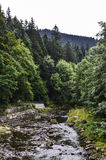 Skogen Royaltyfri Bild
