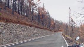 Skogen av kanariefågeln sörjer efter brandkatastrof arkivfilmer