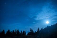 Skogen av sörjer träd under månen och mörk natthimmel för blått fotografering för bildbyråer
