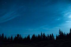 Skogen av sörjer träd under månen och mörk natthimmel för blått arkivbild