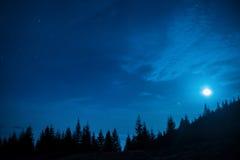 Skogen av sörjer träd under månen och mörk natthimmel för blått