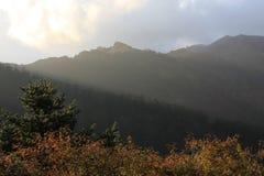 Skogen beskådar Arkivfoto