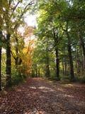 Skogen beskådar royaltyfria bilder