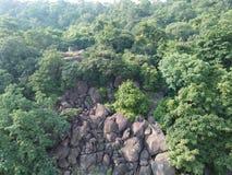 Skogen beskådar Arkivfoton