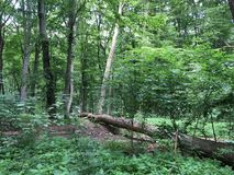 Skogen beskådar Royaltyfri Foto