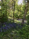 Skogen blommar i vår Royaltyfri Bild
