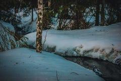 Skogen bryter en bana till och med snön och isen royaltyfri bild