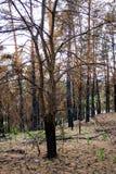 Skogen efter avfyrar Royaltyfria Bilder