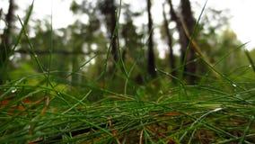 Skogen efter regn royaltyfri fotografi