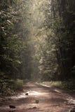 Skogen efter regnar arkivfoton