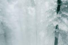 Skogen efter snön Arkivfoto