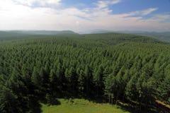 skogen för bashangfågelporslinet sörjer sikt Royaltyfri Fotografi