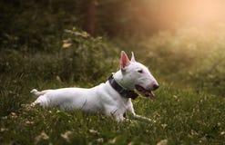 Skogen för solnedgång för hund` s Royaltyfri Fotografi