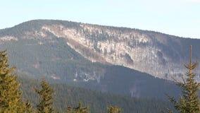 Skogen för vintern för skogbergkullen av en Picea för för bokträdFagussylvatica och gran abies skogen, snö som täckas med ett sto arkivfilmer