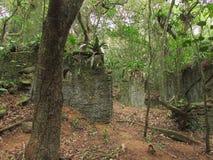 skogen fördärvar Arkivfoto